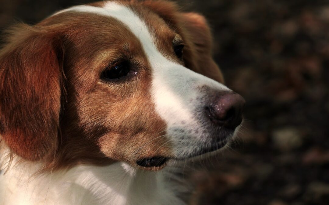 Svod psů OMS Kolín zrušen